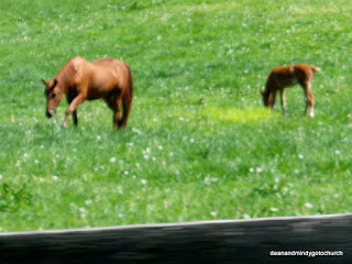 mare and foal near Lexington