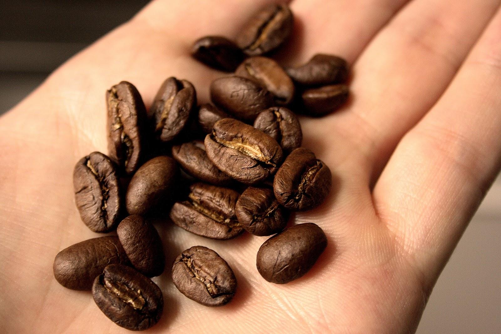 掌に載っているニカラグアのマラゴジッペの珈琲豆
