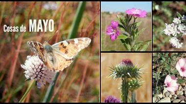 Cosas (flores silvestres) que vuelven en Mayo