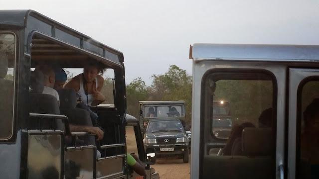 Atascos en el Parque Nacional de Yala (Sri Lanka)