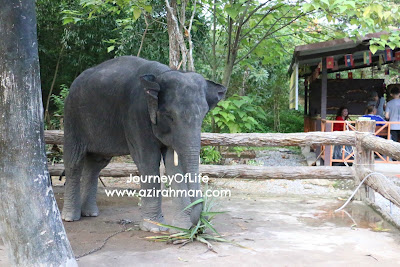 bergajah di chang puak Camp, Hat yai