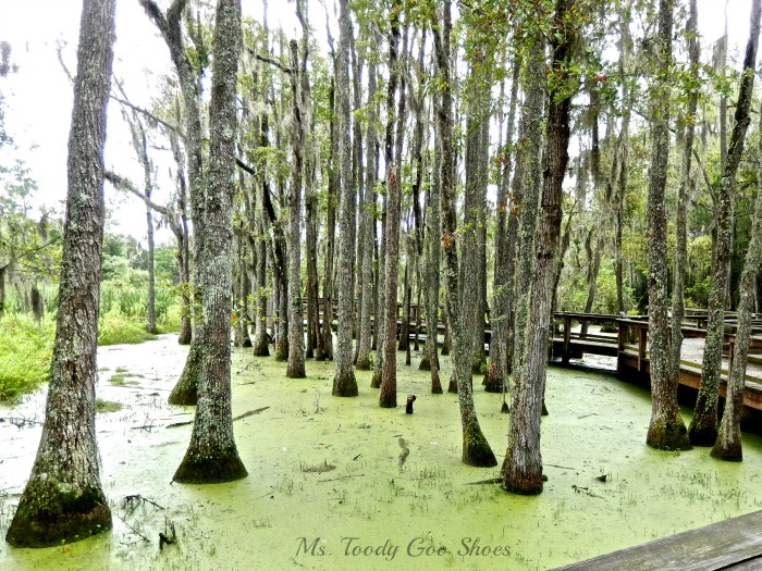 Audobon Swamp Garden at Magnolia Plantation,  SC --- Ms. Toody Goo Shoes