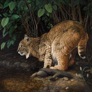 oil painting of a bobcat next to a stream with green leaves in background, created by Barbara Ivie Green
