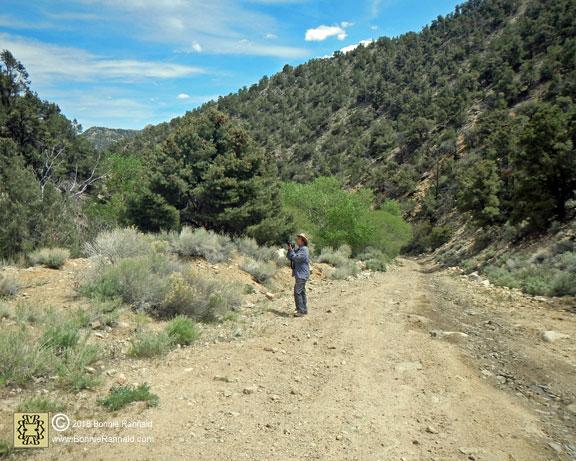 Photographer Bonnie Rannald checking out Corey Peak Trail