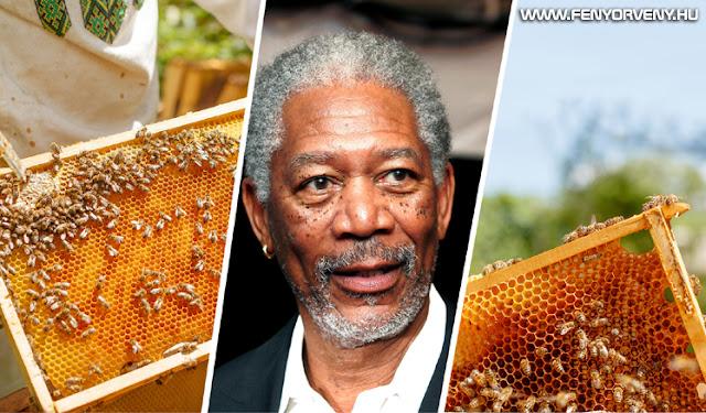 Morgan Freeman méheket költöztetett birtokára, hogy ki ne haljanak