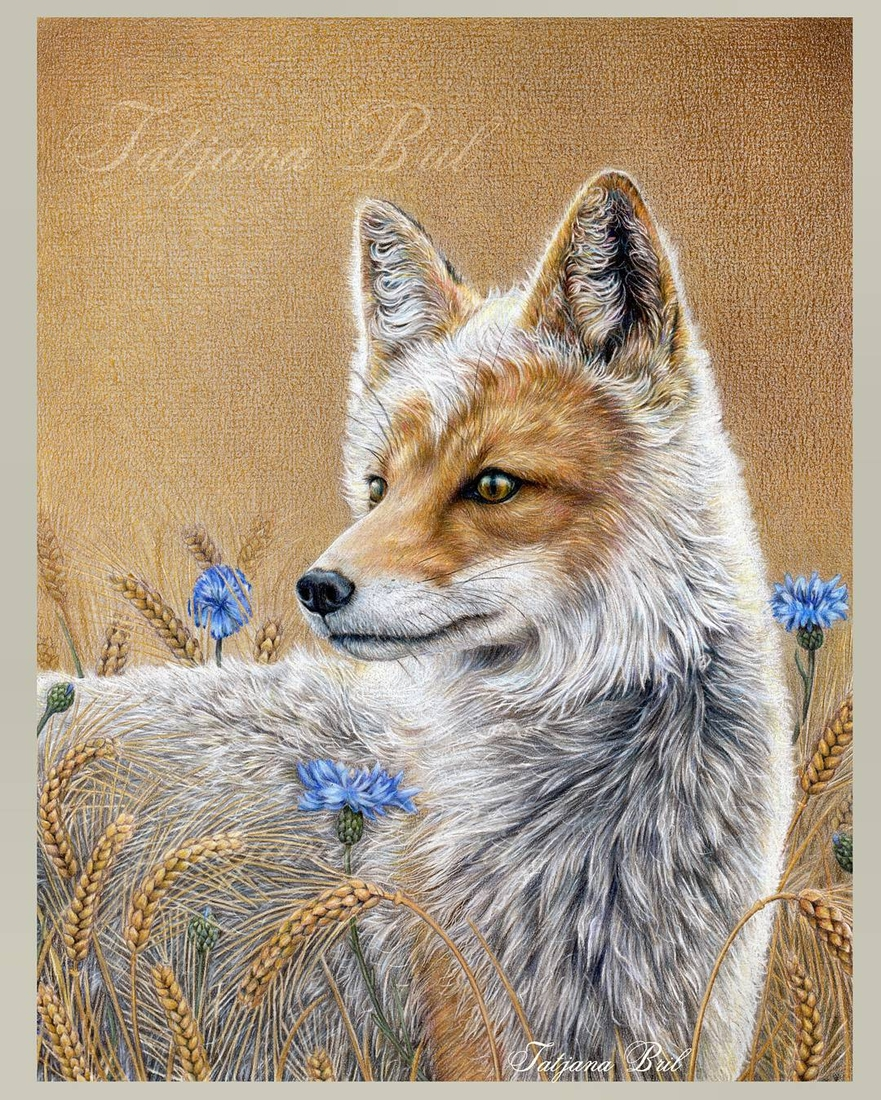 09-Fox-Tatjana-Bril-Domestic-and-Wild-Animal-Drawings-www-designstack-co