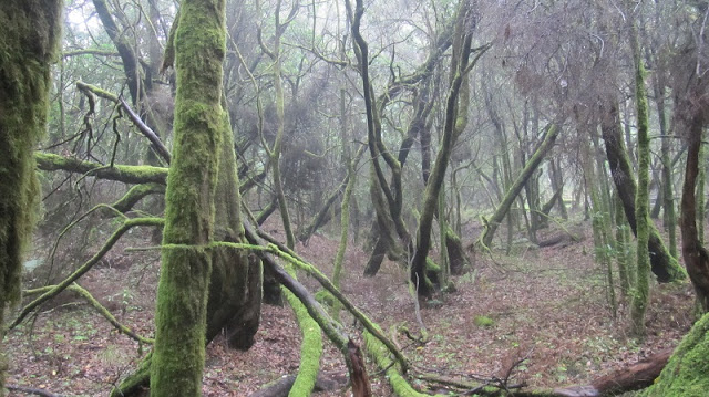 Title: Laurel forest on La Gomera, Source: own resources, Authors: Agnieszka and Michał Komorowscy