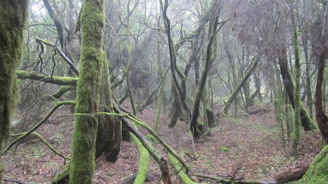 Title: Laurel forest on La Gomera, Source: own resources, Authors: Agnieszka and Michał Komorowscy