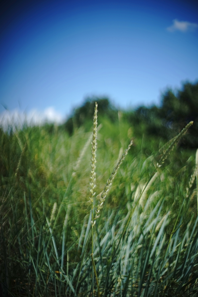Gras freigestellt