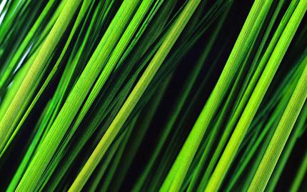 Gambar Gambar Rumput Yang Tinggi Wallpaper