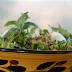 Σαλάτα ζυμαρικών με κατσαρόνι