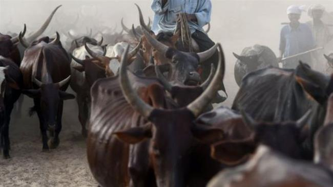 Suspected herdsmen kill 20 farmers in Nigeria's central state of Niger