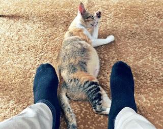 Tanda-tanda kucing hamil