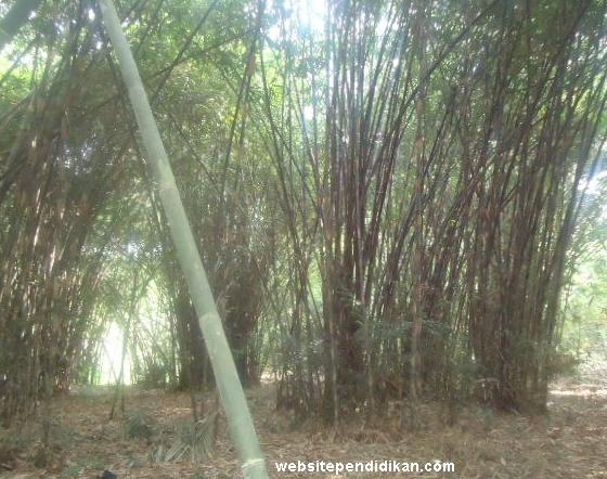 Bambu Tali
