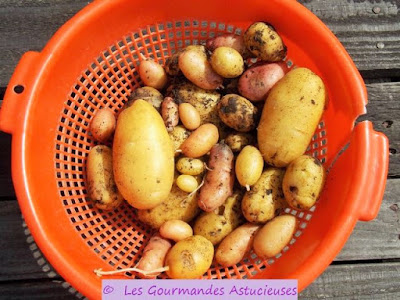 Pommes de terre du jardin