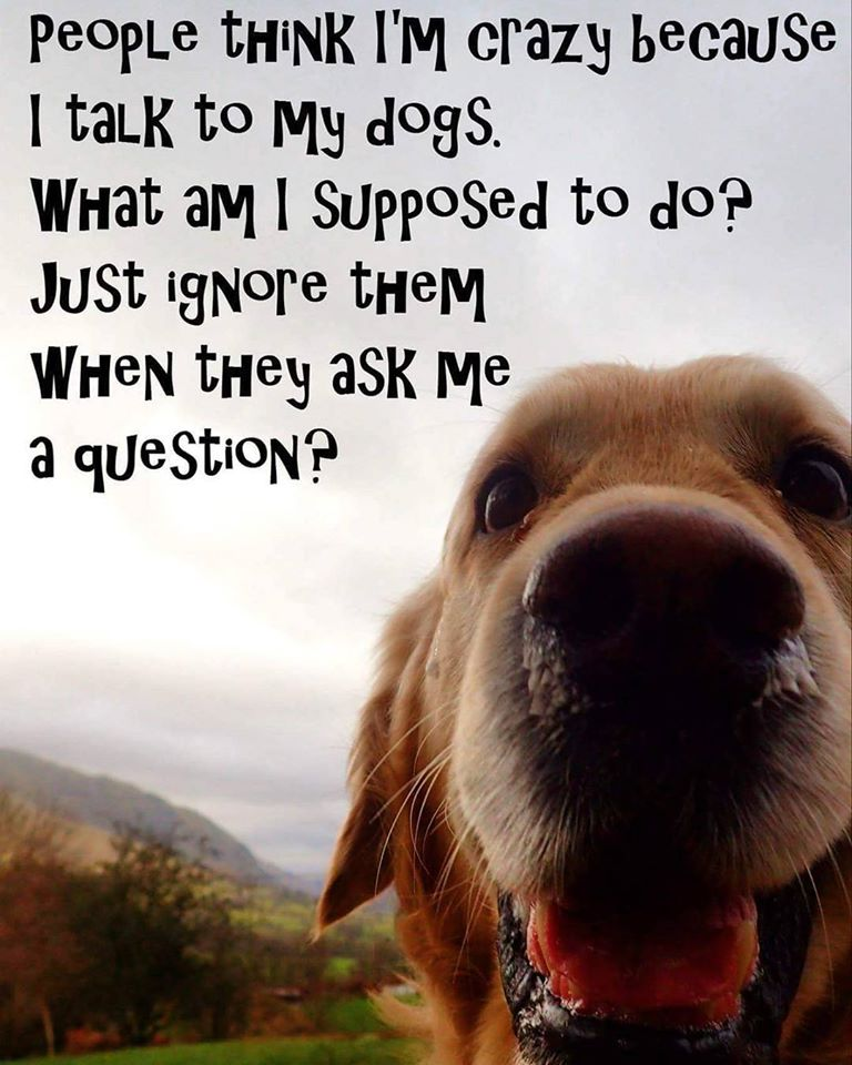 Favourite Dog Quotes | Australian Dog Lover