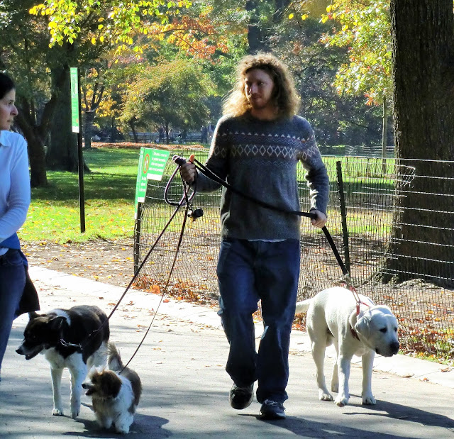 New-York central park promeneur de chiens