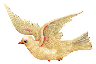 white dove bird illustration digital clipart antique peace image