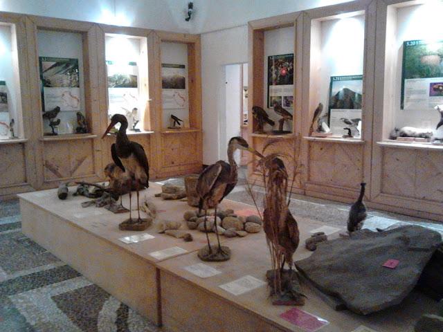 volatili nel Museo storia naturale Aulla