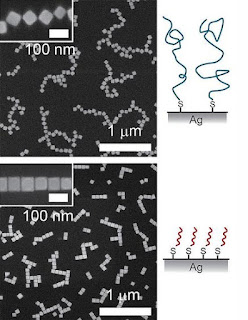 UC San Diego nanoengineers have developed a technique that enables silver nanocubes to self-assemble into larger-scale structures for use in new optical chemical and biological sensors, and optical circuitry. (Credit: Image courtesy of University of California - San Diego)