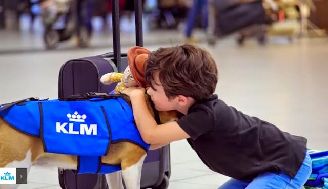 El perro Beagle que devuelve objetos perdidos a pasajeros de KLM