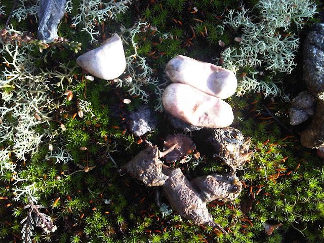 Bébé couleuvre mort dans l'œuf. Fontainebleau