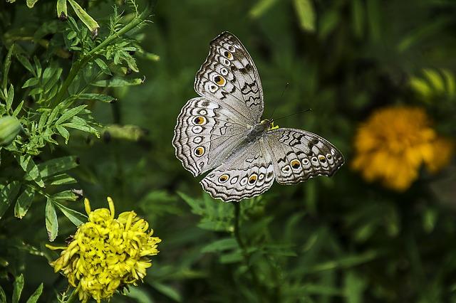 Kemenuh Butterfly Park & Tegenungan Hidden Bali Waterfall Trip Itinerary - Batubulan, Celuk, Mas, Ubud, Kemenuh, Tegenungan Village, Bali