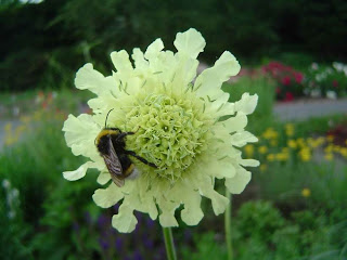 Bee friendly flowers that create maximum impact.