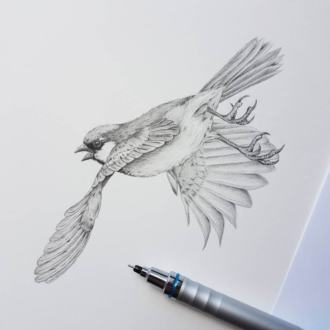11-Sparrow-in-flight-Kerry-Jane-Detailed-Black-and-White-Wildlife-Drawings-www-designstack-co