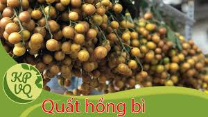 BS Hoàng Khánh Toàn hướng dẫn cách chữa ho cho trẻ không dùng thuốc