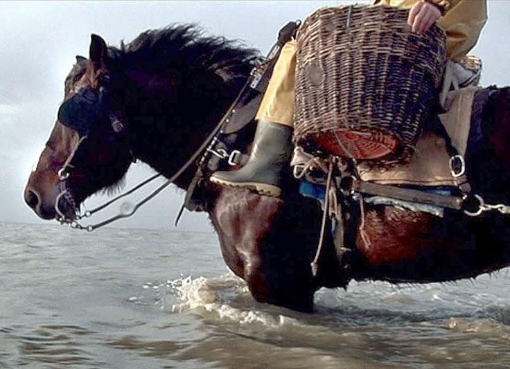 10 Best Places to Holiday in Belgium (100+ Photos) | Horse Fishermen in Oostduinkerke,Belgium