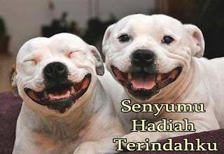 foto 2 anjing sedang tersenyum lucu