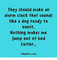 alarm clock dog