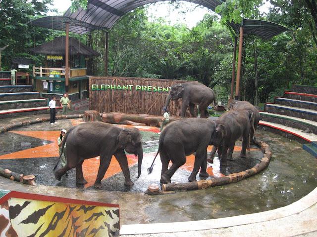 gajah show taman safari prigen pasuruan