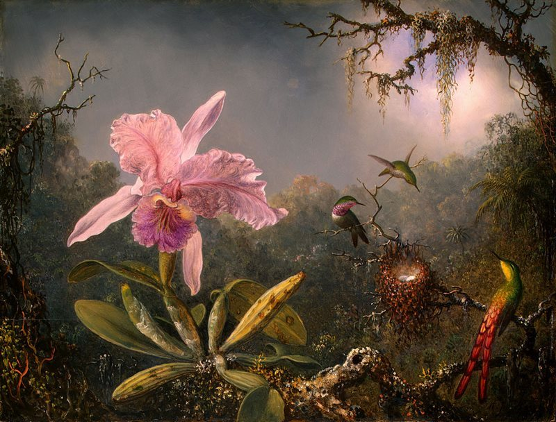 Orquídeas y colibríes con Martin Johnson Heade