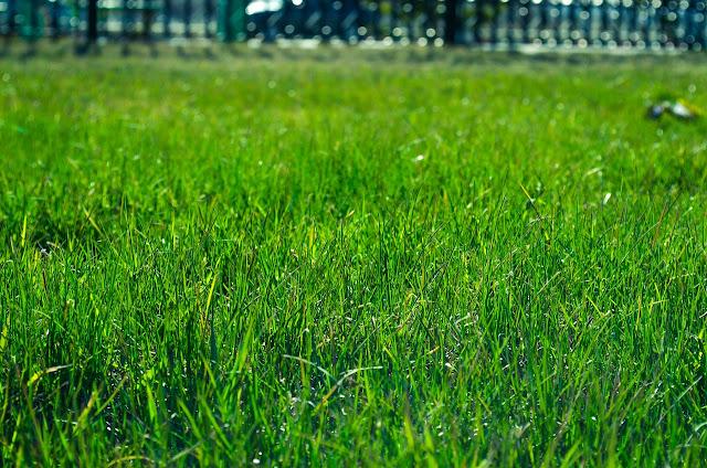 Trzy sposoby na ogród idealny