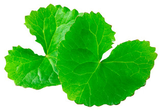 Baraka Gotu Kola Centella Asiatica Plus capsule  one of the greatest healing herbs of all times