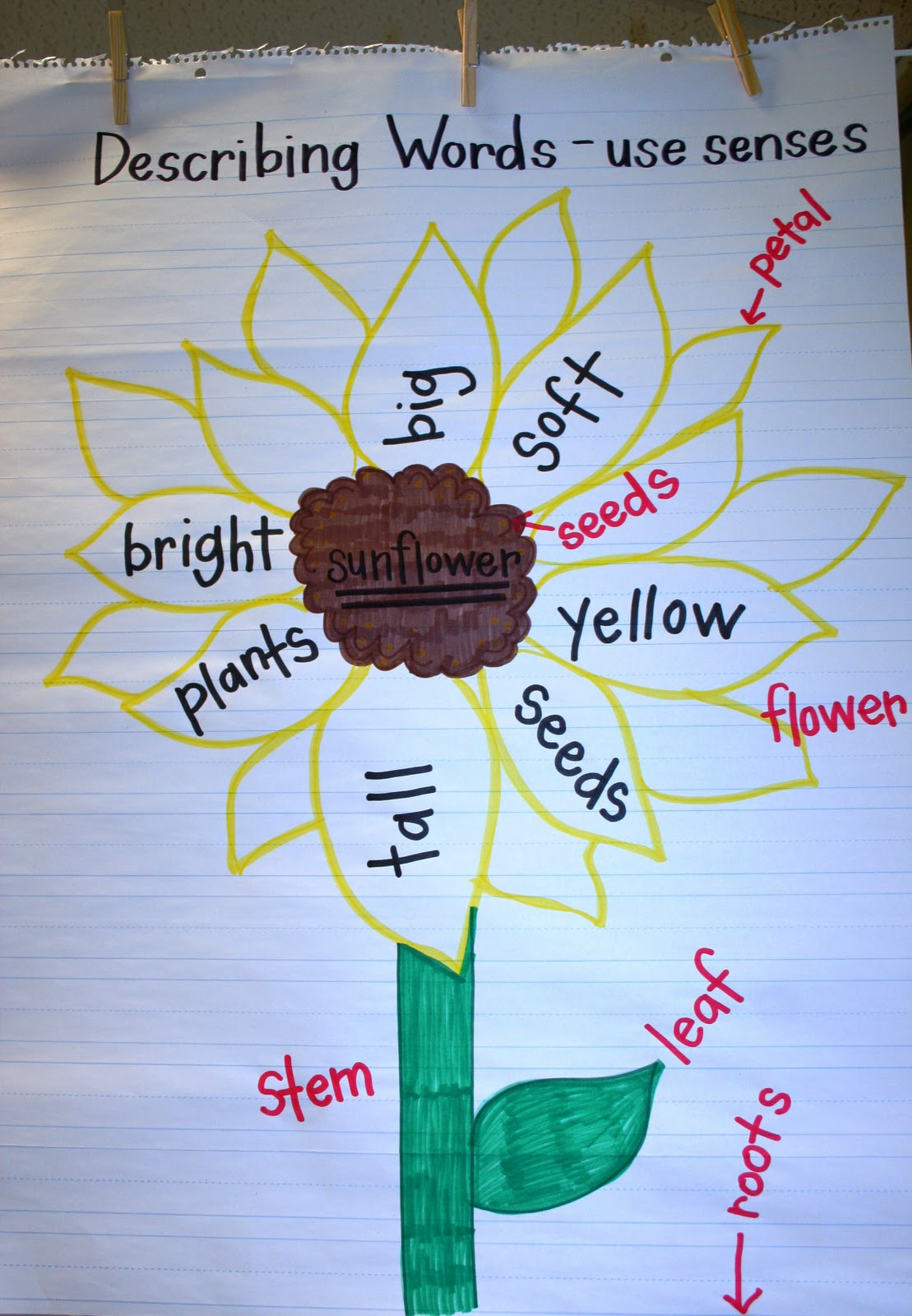 parts of a sunflower diagram electrical wiring basics eberhart 39s explorers plant week