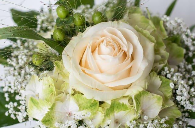 bunga mawar putih menarik