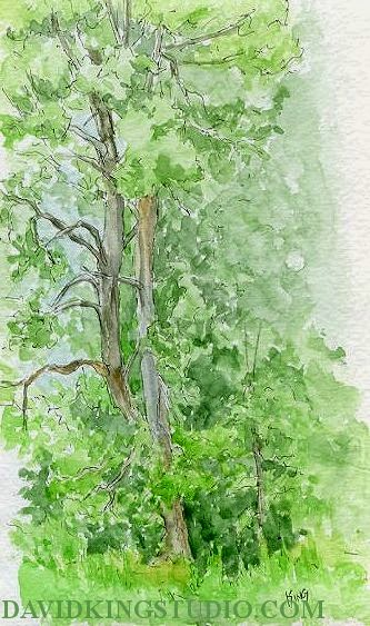 art sketch plein air tree nature pen watercolor