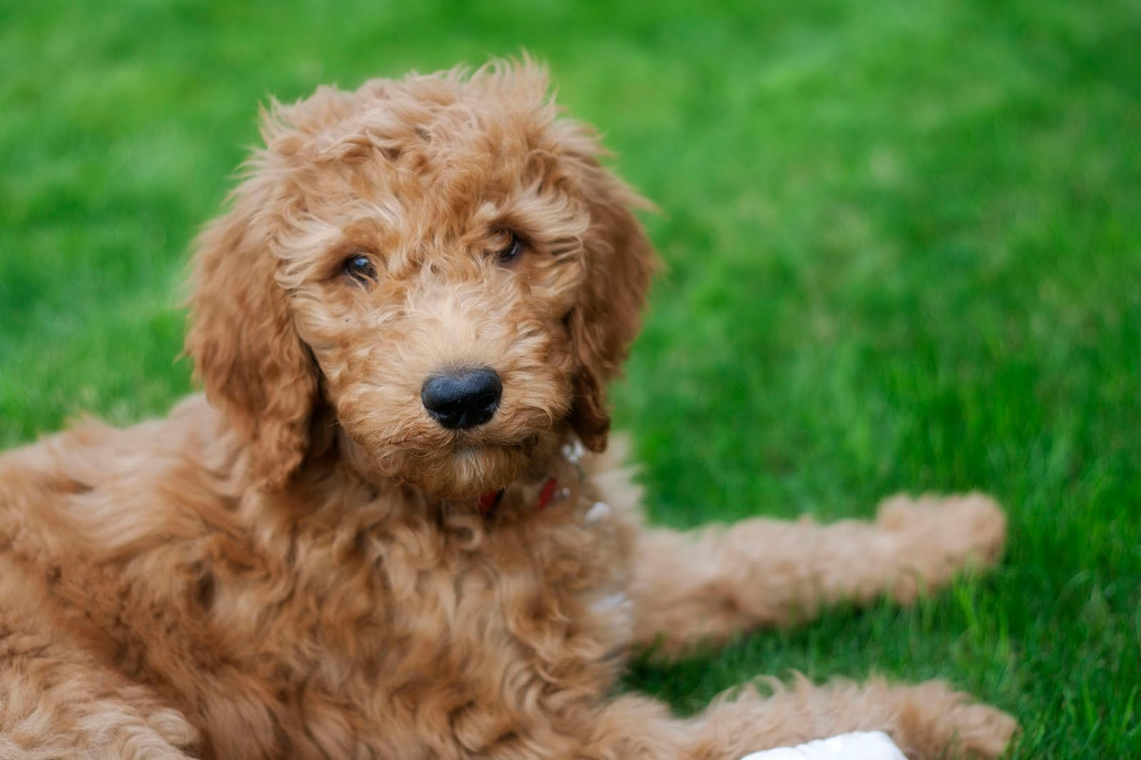 A Crafty Mom's Life: Puppy Love {Introducing Barkley the ...