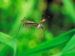 rumah-banyak-nyamuk.jpg