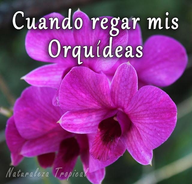 Cuando regar mis orquídeas
