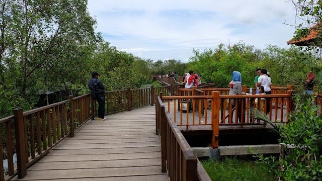 Hutan Mangrove Wonorejo, Surabaya
