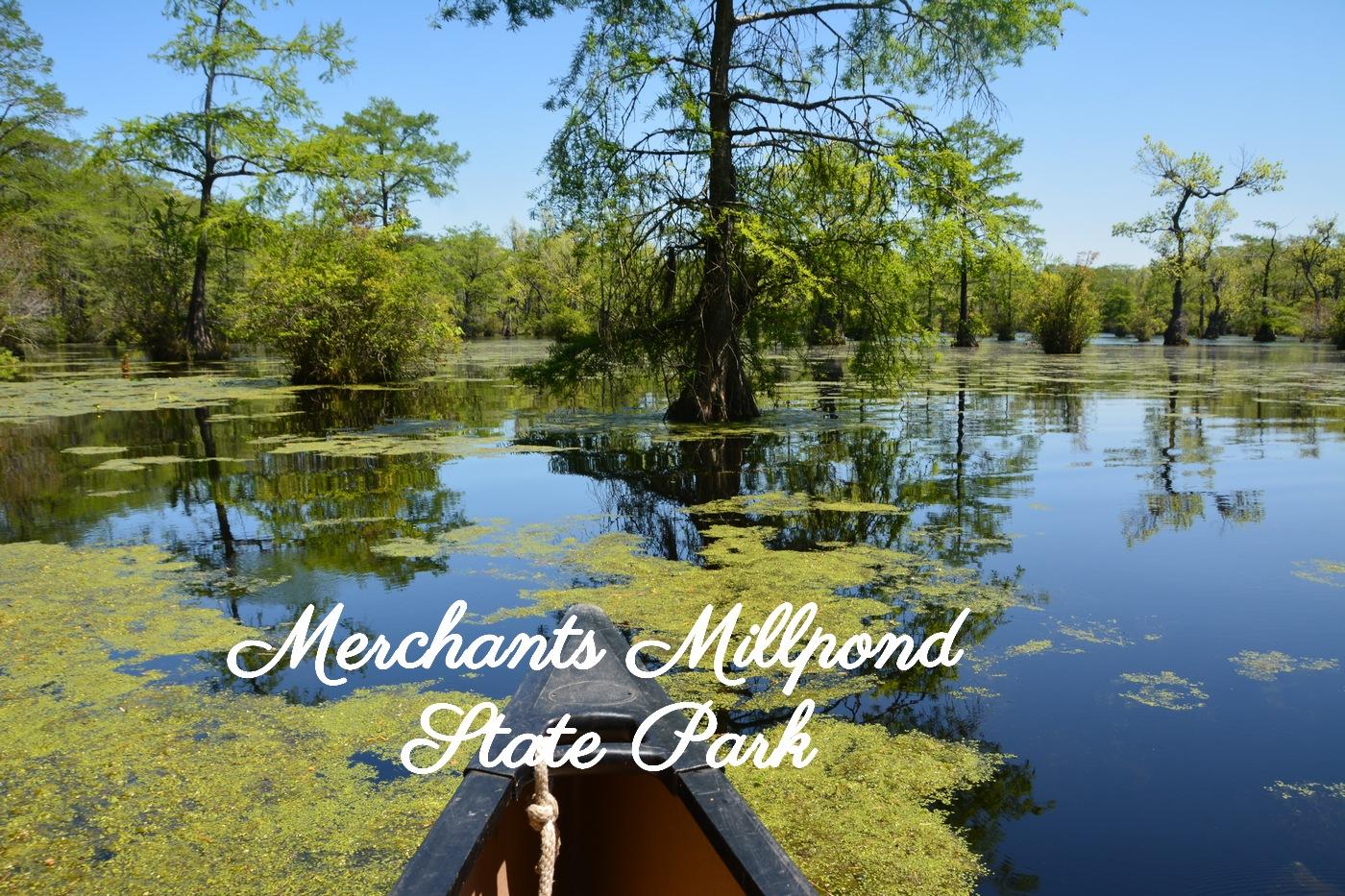 Canoe dans Merchants MillpondStatePark