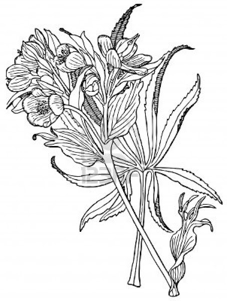 Free coloring pages of cactus for Cactus coloring pages