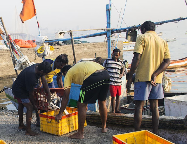 fish, catch, boat, worli jetty, mumbai, india, fishermen,