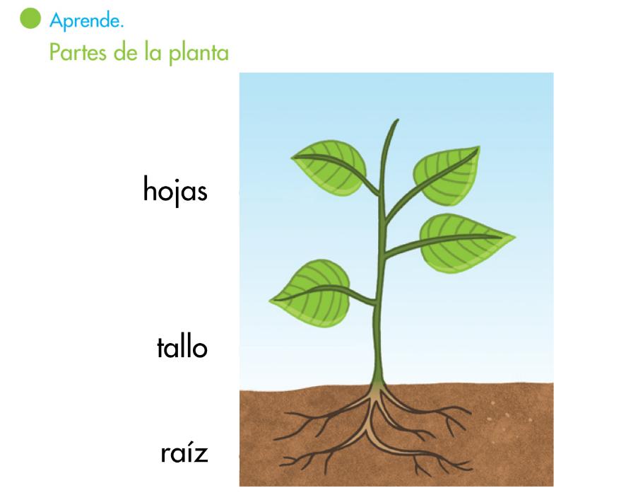 El blog de segundo las plantas ii - Cosas sobre las plantas ...
