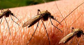 Ακόμη δυο ασθενείς νόσησαν στην Αργολίδα από τον ιό του Δυτικού Νείλου