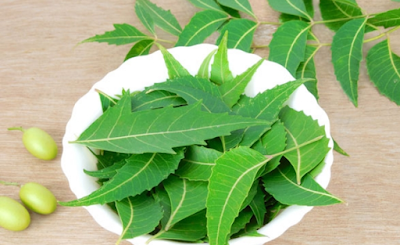 neem for skin neem  for skin care  neem oil for skin care